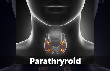 Parathyroid tile