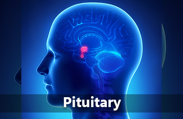 Pituitary tile